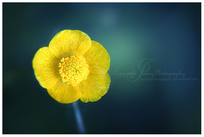 Sweety Yellow by JunnyPhotography
