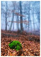 Misty forest by joffo1