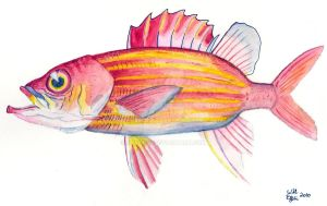 Jordan's Squirrelfish by SurfTiki
