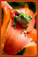Tree Frog Flower by UffdaGreg