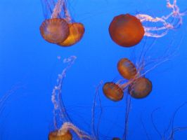 Jellyfishes by SpikedPyro