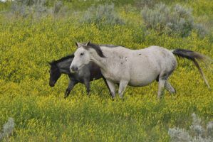 Wild Mare and Foal by ArtistStock