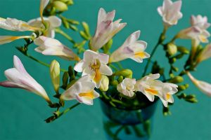Freesia On Green by MissSpocks