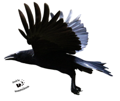Cut-out stock PNG 122 - great flight of the crow by Momotte2stocks