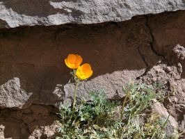 Flower on Taquile by jelbo