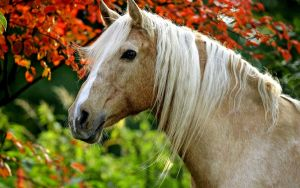 Palomino in the fall by solitaire20