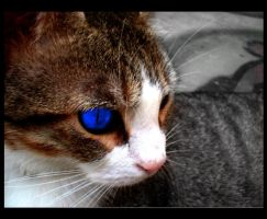 The cat around the house by codependent