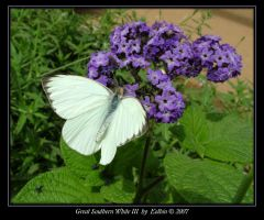 Great Southern White III 9831 by Eolhin