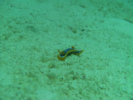 Tiptoeing across the Seabed by Jugurtti1000
