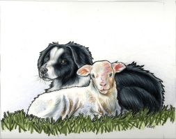 border collie and lamb by EatToast