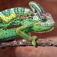 I'm looking you... by princi83