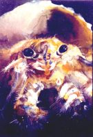 Hermit Crab by dfbovey