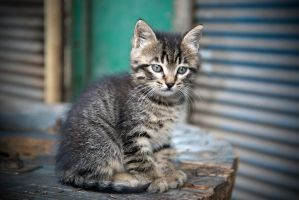 baby cat was alone by jimbaba