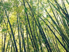 Bamboo Symphony by Methvell