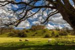 Mitford Castle by newcastlemale