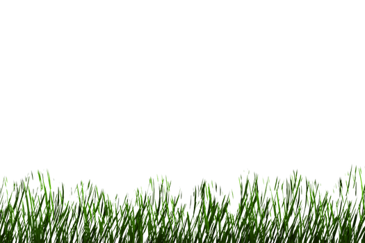 Grass png 1 by AStoKo