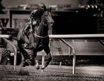 A Day At The Races -I Can Fly by AndersStangl
