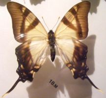 moths and butterflies stock119 by hatestock