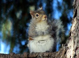 Frigid Squirrel. by sweatangel