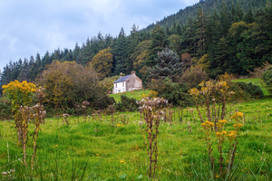 House by the Woods by seanser