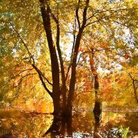 East Branch Autumn by jnati