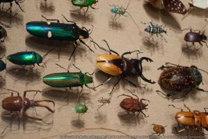 Bugs : 03 by taeliac-stock