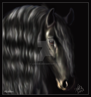 Friesian charm by Liaram