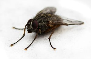 Fly macro by JimPMM