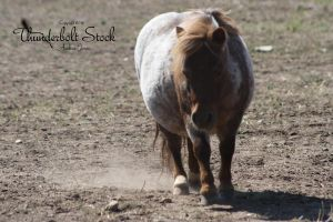 Red Roan Pony Stock by Thunderbolt-Designs