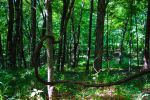 00-TalorsvilleLakeStatePark-June-2015-DSC07005-WP- by darkmoonphoto