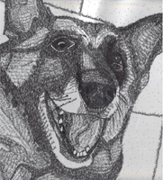 Dog pen and ink by Damorik