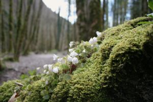 moss and wild flowers by ingeline-art