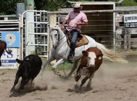 Stock - Horse Team Penning - 035 by aussiegal7