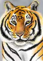 Tiger portrait by Tianithen