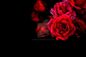 Red Roses by mfuld