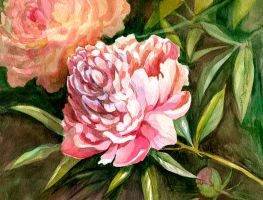 Pink peony by XViolacea