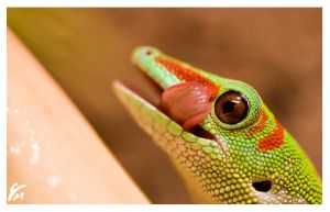 a gecko's wink by SonicAdvance