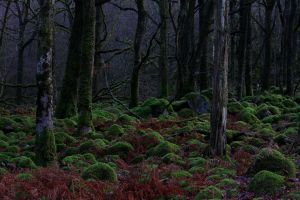 Enchanted forest by Cantabrigian