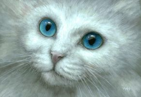 White Cat - part1 of Cats Eyes by nudge1