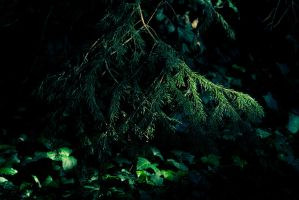 Pine and Ivy in Shadows by kbhollo
