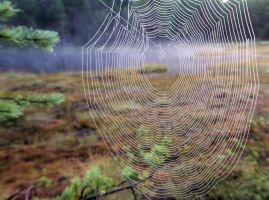 spiderweb 1 by KariLiimatainen