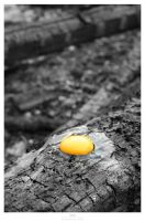 Dead Egg by Gustavs