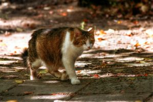 Kitty walks by Emmatyan