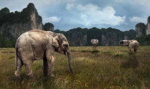 Elephants by ChiaraLily9
