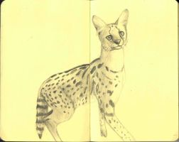 Serval by Flynn-the-cat