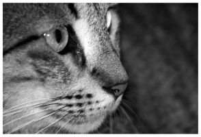 Cat Profile by JacquiJax