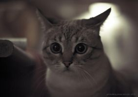 Curious kitty... by Yohao88DG