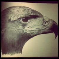 Eagle Head by sampeterson