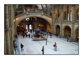 Natural History Museum by murraywilson