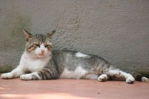 Cat Stock 39 by Malleni-Stock